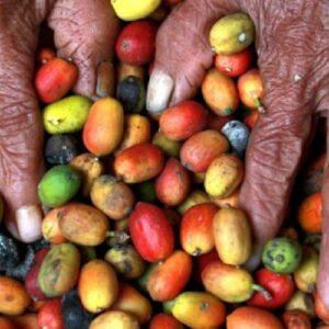 Rediseñando sistemas alimentarios en Chiapas, México
