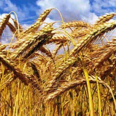 La vida y la historia, entre el trigo y la cizaña