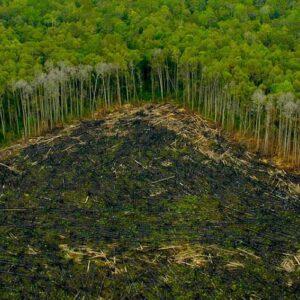 El presidente Temer reduce la protección del área amazónica