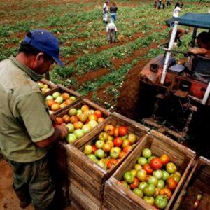 Bolivia es autosuficiente en la producción de alimentos