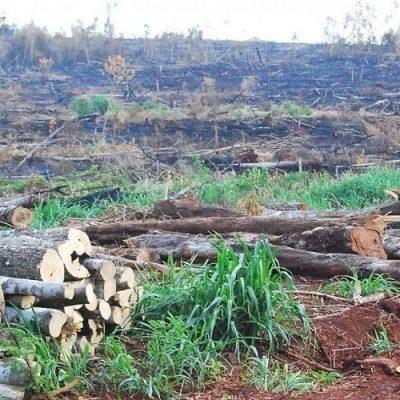 La deforestación avanza en Paraguay