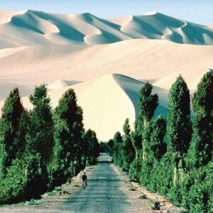 África realiza una gran muralla de árboles contra la desertificación