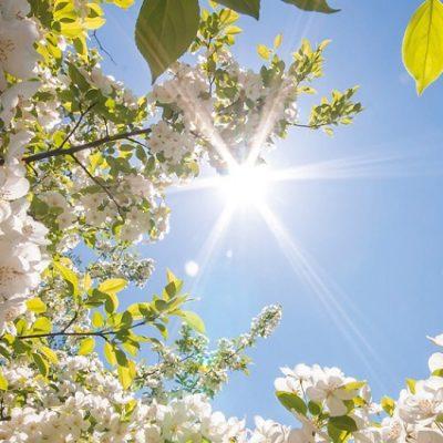 Reflexión CEI: Tiempo de nueva primavera