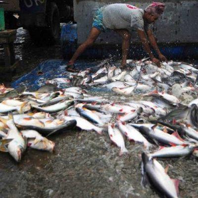Establecen prioridades para una pesca sostenible