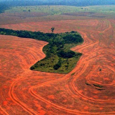 La deforestación amazónica podría llegar al punto de no retorno