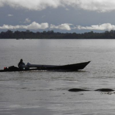 El Papa participa en el presínodo de la Amazonia