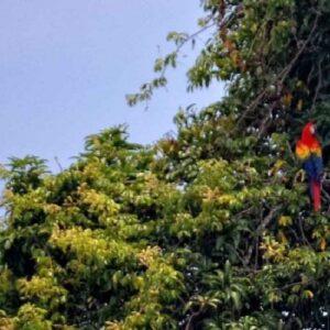 Alerta sobre pérdida de biodiversidad de Sudamérica