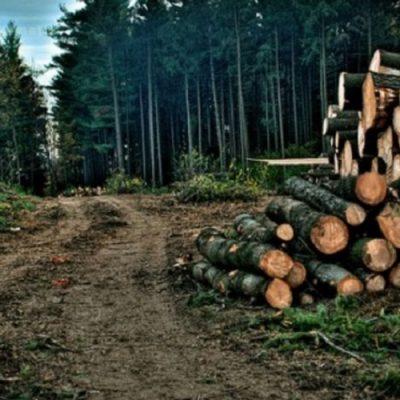 El lucrativo negocio de la tala ilegal que reduce nuestros bosques