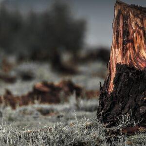 El planeta perdió 300 mil km2 de bosques en 2017