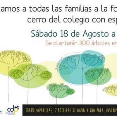 Saint George's College: Forestación de un bosque esclerófilo