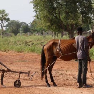 Sin Derecho a la Alimentación, no es posible garantizar el resto de Derechos Humanos