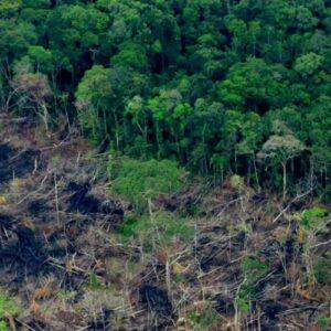 Antes de 2022 Colombia quiere plantar 180 millones de árboles