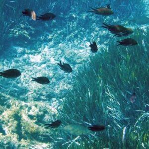 El plancton, fuente de vida en peligro