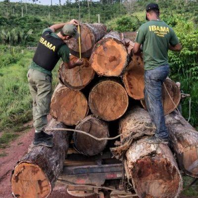 Madera en la Amazonía, una fuente de lucro y destrucción