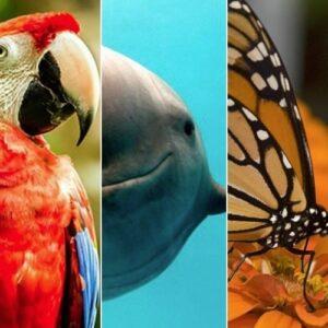 Un millón de especies en riesgo de extinción