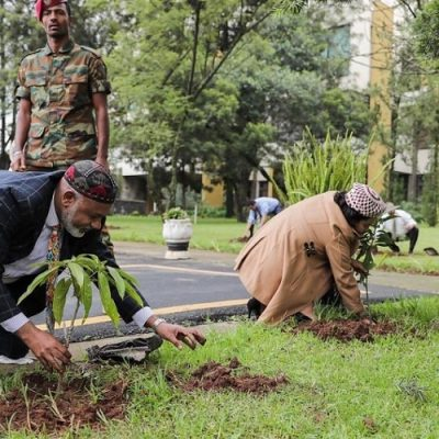 Etiopía da un ejemplo al mundo plantando más de 350 millones de árboles en un día