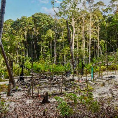 El Amazonas en la mira