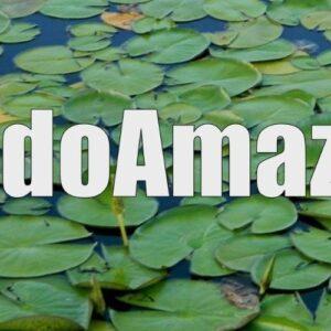 Secretarios especiales del Sínodo: ¿Por qué el Amazonas amerita un Sínodo?