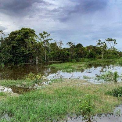 Cardenal Parolin en la ONU: Protejamos los bosques tropicales y sus habitantes