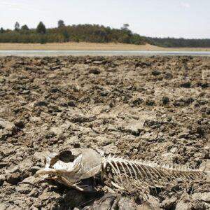 Sequía récord en las regiones centrales