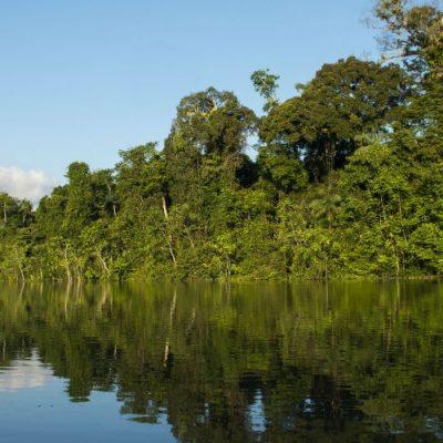 Amazonía peruana: Una de las zonas con mayor biodiversidad del planeta