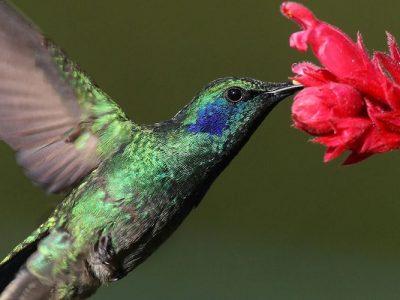 La espiritualidad del colibrí