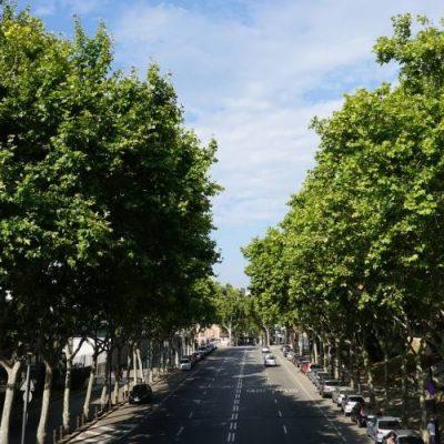Bosques urbanos para bajar las temperaturas de las grandes ciudades