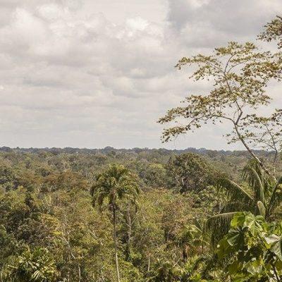 Leyes que protejan a los pueblos originarios y al Amazonas