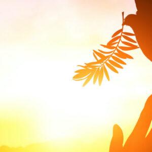 ¿Has experimentado el consuelo interior del Espíritu Santo?