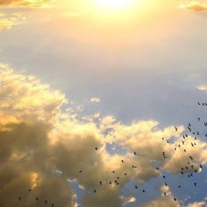 Vaticano, ecología integral: Salvaguardia de la Creación es responsabilidad de todos