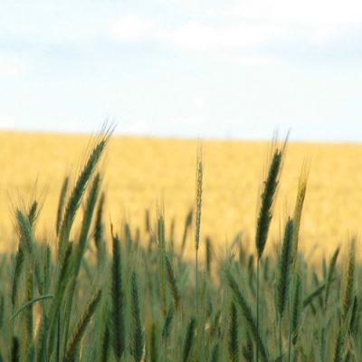 Los campesinos que se defendían del hambre y de terratenientes entendían muy bien a Jesús