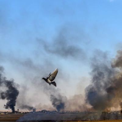 Cese al fuego mundial: El Papa apoya Resolución del Consejo de Seguridad de la ONU